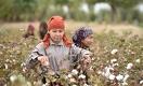 Cotton Campaign пока не готова снять бойкот с узбекистанского хлопка