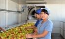 С какими сложностями столкнется продовольственный рынок Узбекистана на фоне пандемии