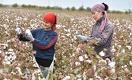 Япония выделила $3 млн на поддержку женщин в сельской местности Узбекистана