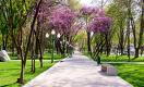 Хокимият Ташкента опубликовал проект генплана развития города до 2041 года
